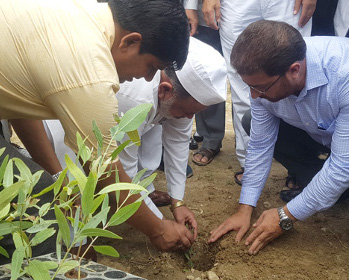 Tree Plantation at Glocal University